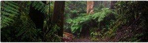 Explore the Dandenongs Australia
