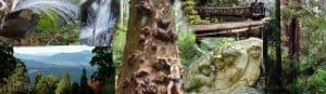Dandenongs Australia