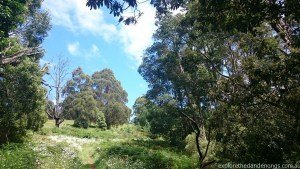 Rock Track Circuit Walk Olinda