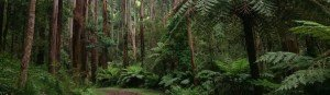 Walks and maps of the Dandenong Ranges National Park