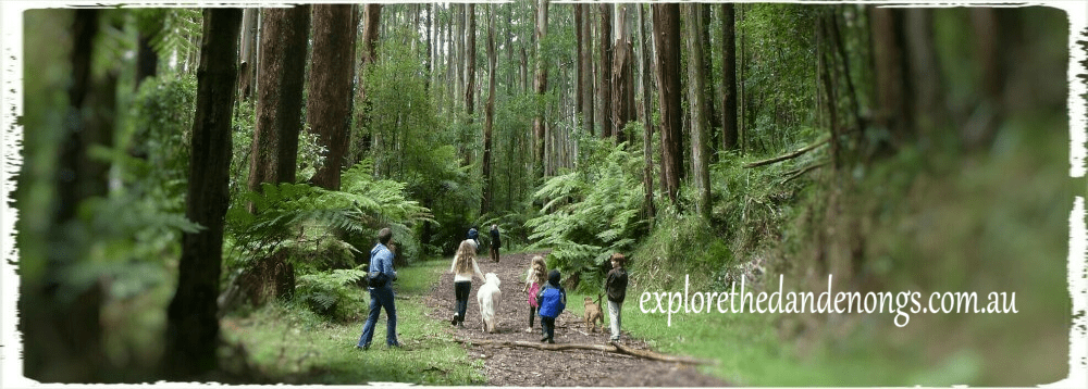 Explore The Dandenong Ranges - over 30 walking tracks and dog friendly walks