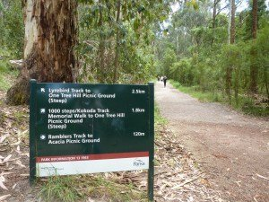 1000 Steps Kokoda Trail Dandenong Ranges