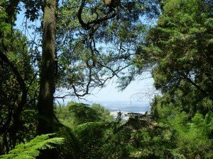 Viewpoints Dandenong Ranges