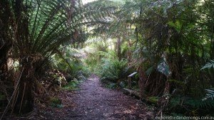 Hardy Gully Nature Trail Dandenong Ranges