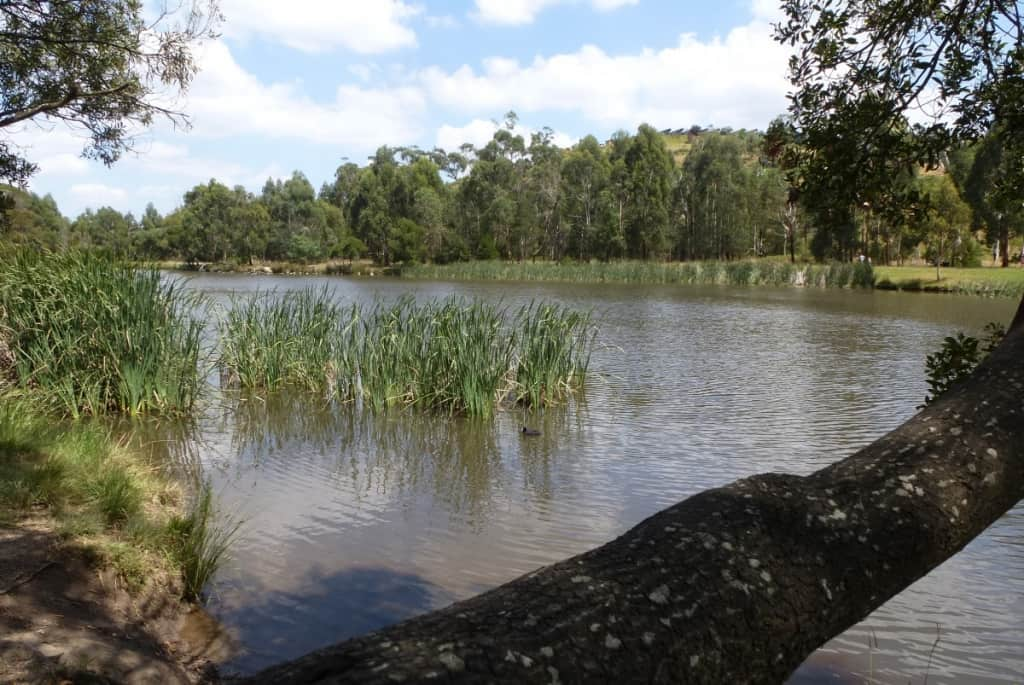 Birdsland Reserve (16)