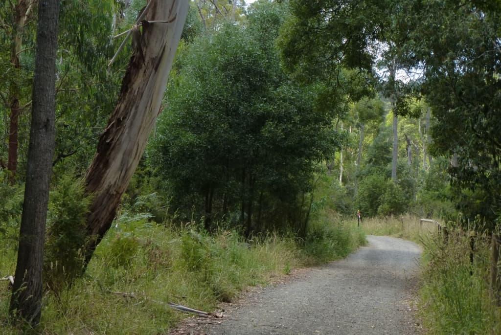 Birdsland Reserve (25)