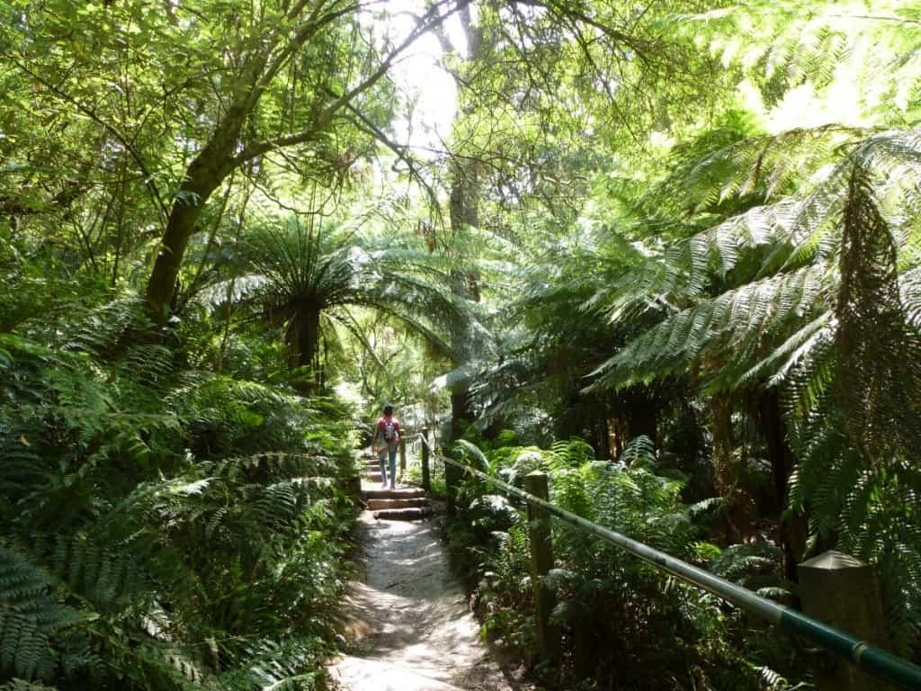 1000 Steps Kokoda Trail Dandenong Ranges