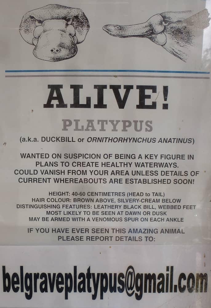 Belgrave Platypus