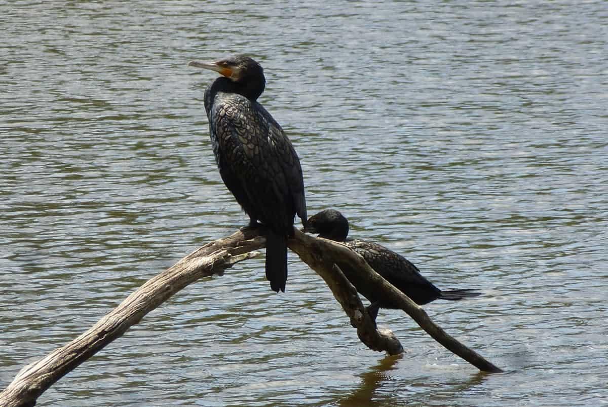 Birdsland Reserve South Belgrave