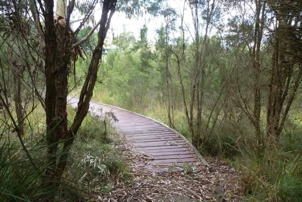 Birdsland Reserve (27)