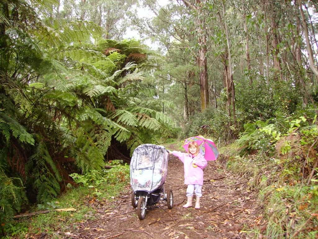 Pram Friendly Walks Dandenong Ranges
