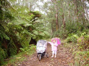 Pram Walks Dandenong Ranges