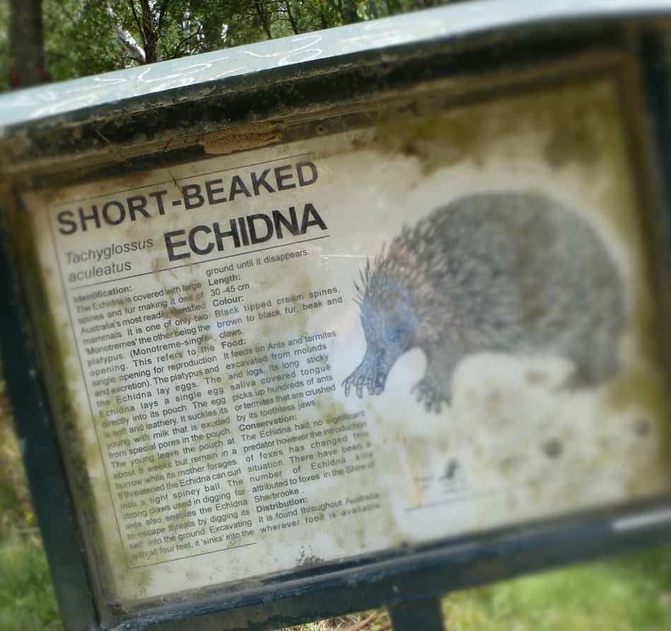 Birdsland Reserve Sign Echidna