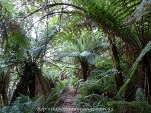 Tourist Track - Sassafras to Monbulk