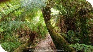 Sassafras to Emerald Walking Trail