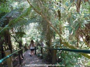 Sherbrooke Falls Walking Track Dandenong Ranges