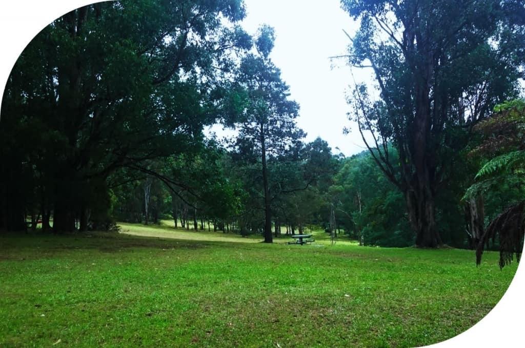 Valley Picnic Ground Dandenong Ranges