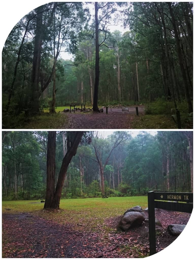 Valley Picnic Ground Dandenong Ranges