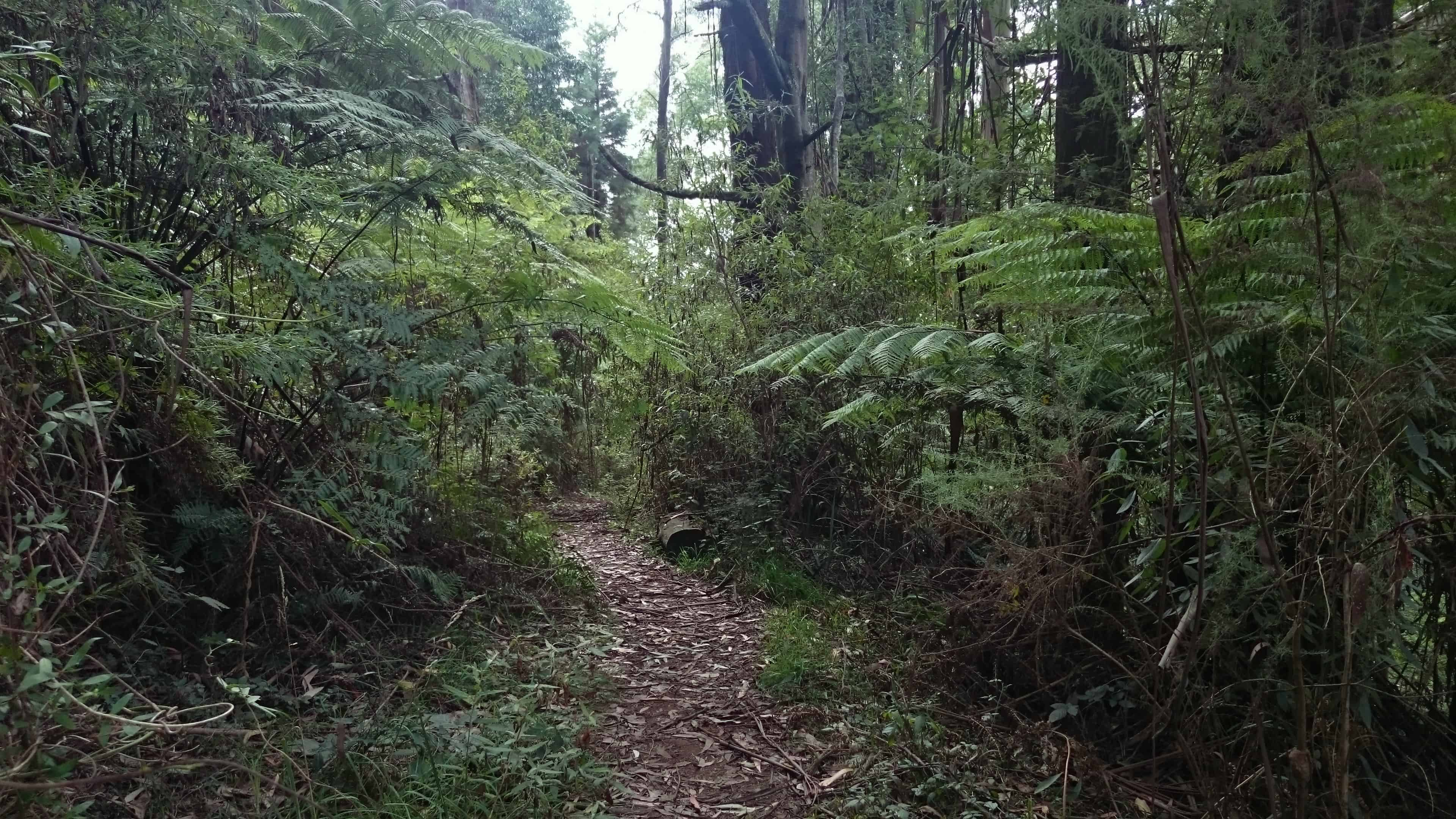 Hamer Arboretum dog-friendly walking tracks, Mount Dandenong Australia