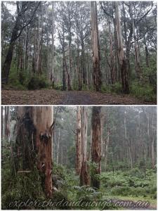 Valley Picnic Ground Loop Walk Dandenong Ranges