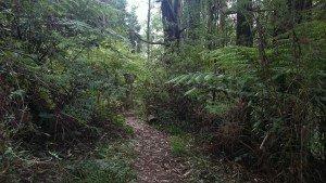 Hamer Arboretum Mount Dandenong Australia