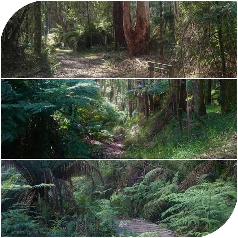Blackhole track Dandenong Ranges