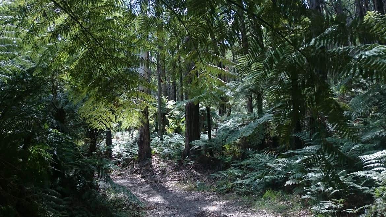 Doongalla Homestead History - Walking Tracks