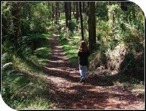 Olinda to Sassafras Walk