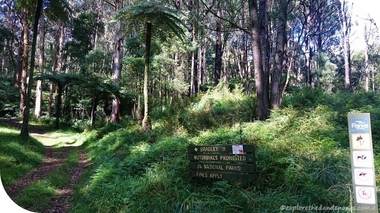 Olinda-Sassafras Walk (4) (Copy)
