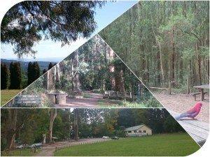 Picnic Grounds Dandenong Ranges