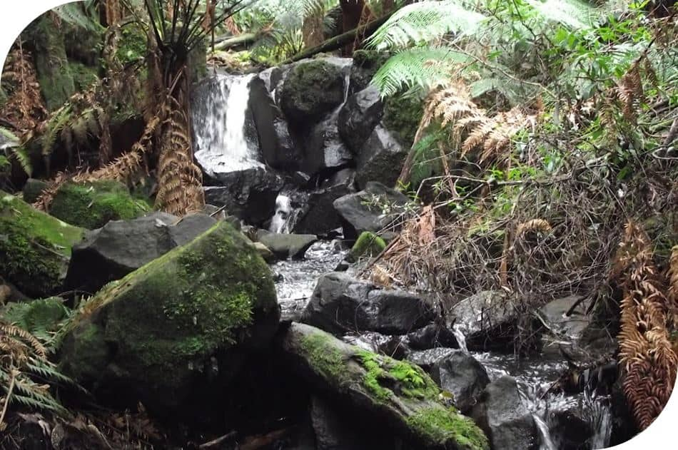 Sherbrooke Falls Dandenong Ranges Australia