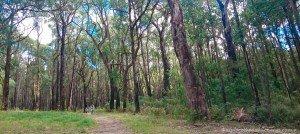 Emerald to Cockatoo Trail - Ride or Walk