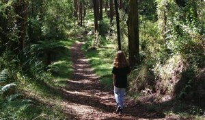 Olinda to Sassafras walking track