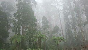 Misty Dandenongs