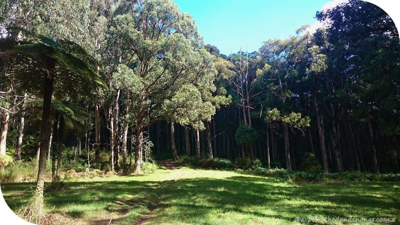 Olinda-Sassafras Walk (3) (Copy)