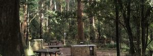 Picnic Grounds Dandenongs