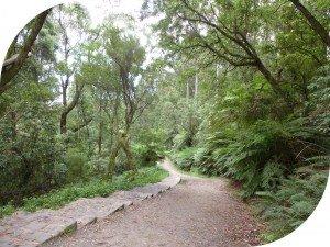1000 Steps Dandenong Ranges - Lyrebird Track