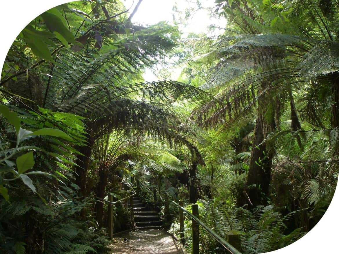 1000 Steps-Lyrebird-Track