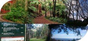 Dandenong Ranges 20km Hiking Trail