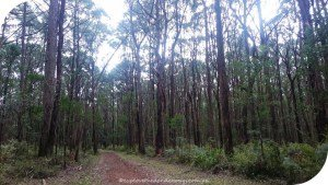 No 13 Track to Mt Evelyn