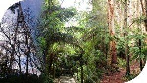 Mt Dandenong Hiking Trail