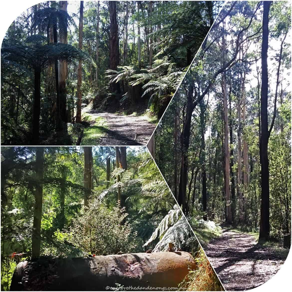 FTG-Mount-Dandenong-5 (Copy)
