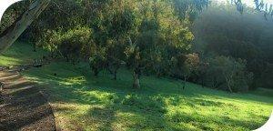 Kalorama-Park Nature Walk