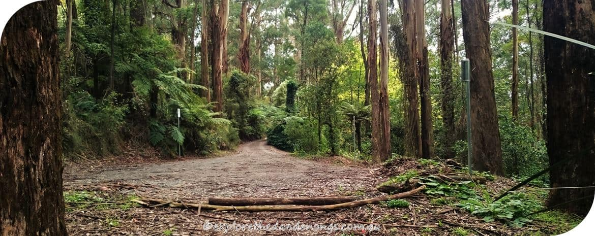Kalorama-Park, Dandenong Ranges. Walking Tracks near Melbourne
