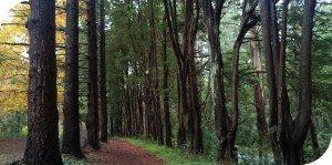 Tan-Track-Sherbrooke-Dandenong-Ranges