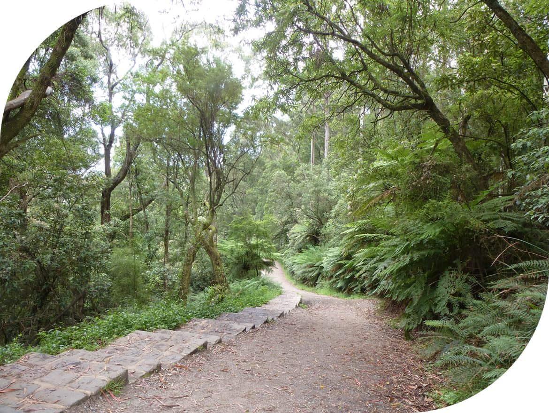 Lyrebird-Track