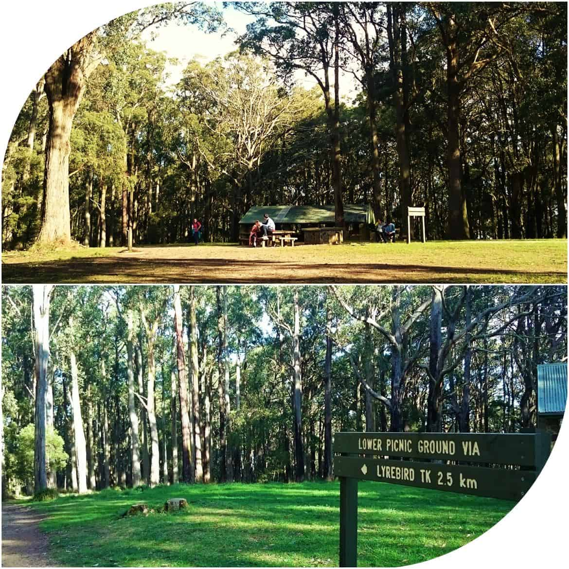 One Tree Hill Picnic Area