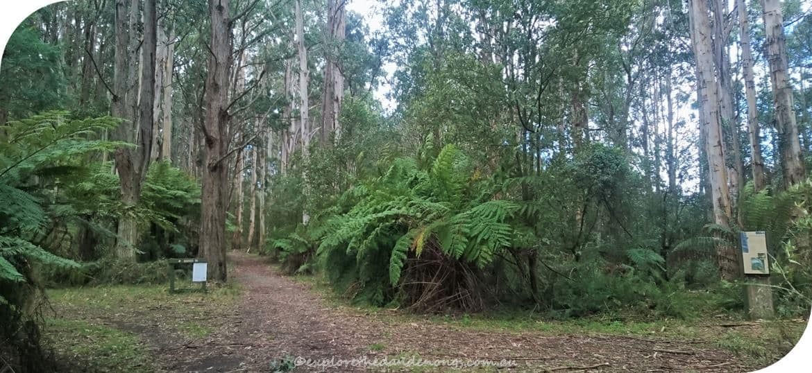 Mount Dandenong to Mount Evelyn Walking Track