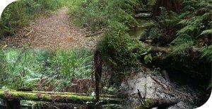 Olinda Creek Walking Track Silvan to Mt Evelyn