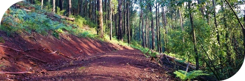 Olinda to Skyhigh Walking Track